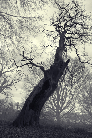 Spooky screaming tree